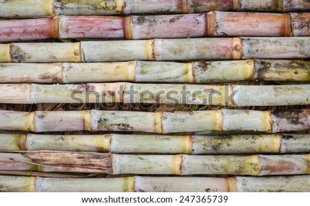 Freshly Cut Sugar Cane Group Together as a Texture Background - stock photo
