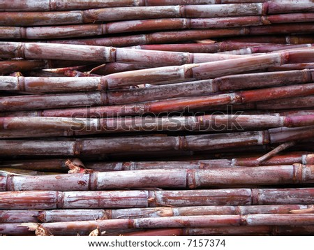 Freshly cut sugar cane in Madeira Island - stock photo