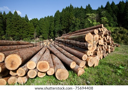 Freshly cut tree logs piled up - stock photo