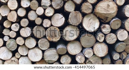 Freshly cut tree logs piled up in a forest - stock photo