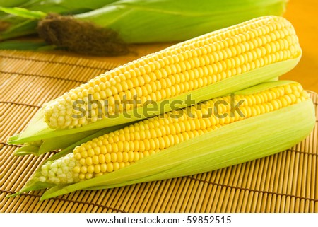 Freshly grown and tasty corn on the cob.