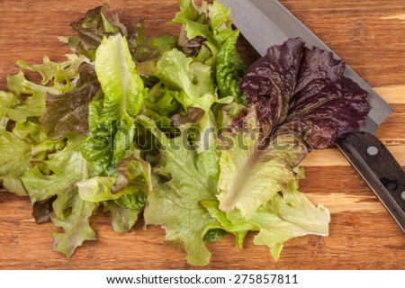 Freshly harvest Lola Rosa lettuce, mustard greens, buttercrunch, and assorted lettuce next to a professional chef's knife on a bamboo cutting board - stock photo