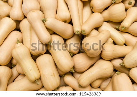 Freshly harvested butternut or winter squash on display at the farmers market - stock photo