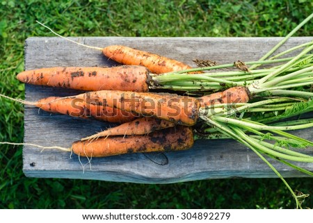 Freshly harvested carrots, top view - stock photo