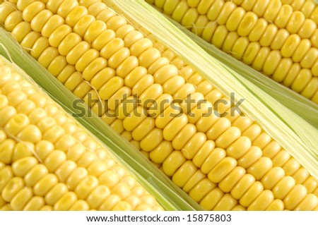 Freshly harvested corm