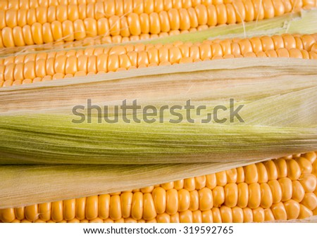 Freshly harvested corn on wooden background, corn oil