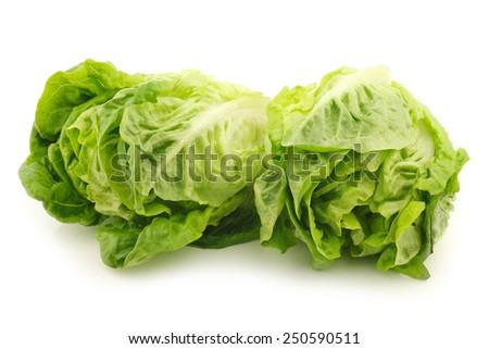 """freshly harvested green """"little gem"""" lettuce on a white background - stock photo"""