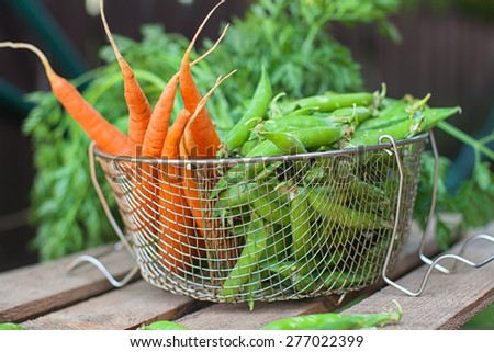 Freshly harvested green peas and carrots  - stock photo