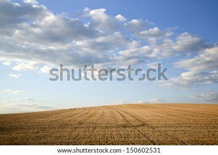 Freshly harvested hay field in countryside Summer landscape