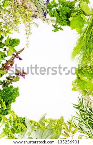 Freshly harvested herbs, herbs frame over white background - stock photo