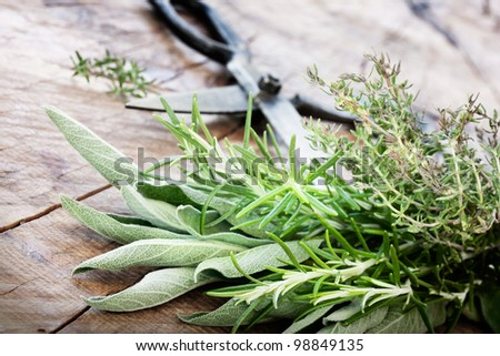 Freshly harvested herbs with old antique scissors on wood background. Fresh sage, thyme, mint and rosemary leaves - stock photo