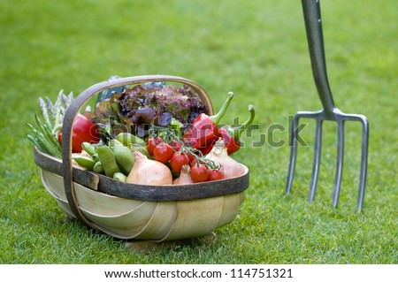 freshly harvested home grown vegetables in a wooden trug