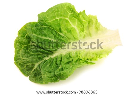 freshly harvested little gem lettuce leaf on a white background - stock photo