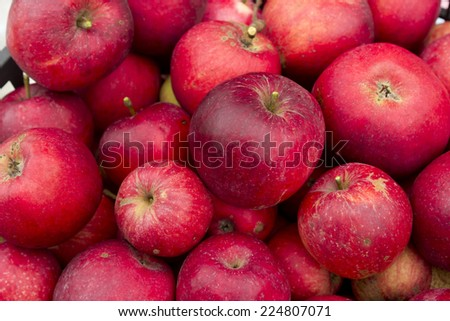 freshly harvested red apples - Autumn - stock photo