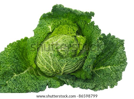 Freshly harvested Savoy cabbage isolated on white