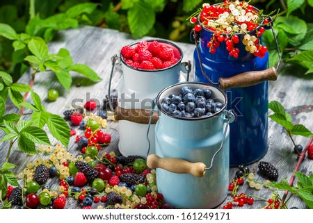 Freshly harvested wild berry fruits - stock photo