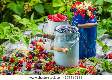 Freshly harvested wild berry fruits in summer - stock photo