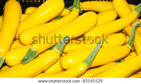 Freshly harvested yellow squash on display at the farmer's market