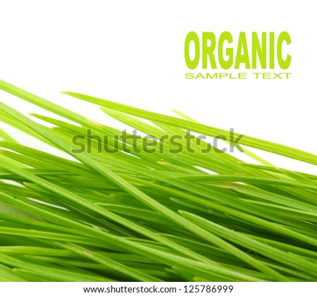 Freshly harvested young green barley. Organic food concept. Picture with space for your text. - stock photo