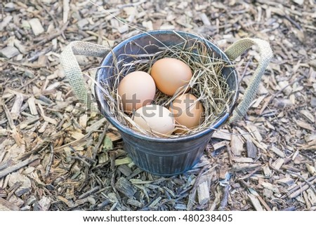 Freshly Laid Brown Eggs