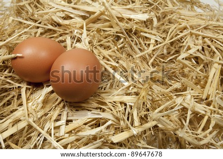Freshly laid eggs at a poultry farm