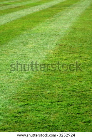 Freshly mown green grass lawn