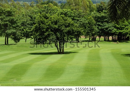 Freshly mown lawn and trees in a golf course - stock photo