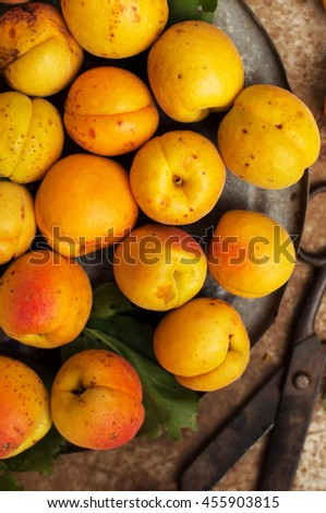 Freshly Picked Apricots. Organic Apricots in metal  table.  apricots in a crate - stock photo