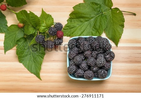 Freshly Picked Black Raspberries in Dish Among its Leaves - stock photo