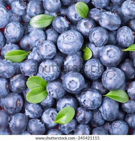 Freshly picked blueberries background  - stock photo