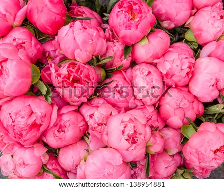 Freshly picked bouquet of peony flowers on display at the farmers market - stock photo
