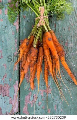 freshly picked carrots on wooden surface - stock photo