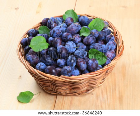 Freshly picked damson plums - stock photo