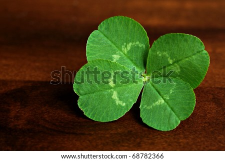 Freshly picked four leaf clover on wood background.  Macro with shallow dof.