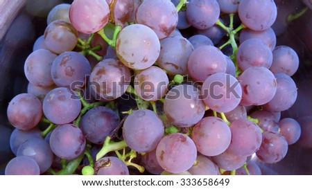 Freshly picked home grown Concord grapes