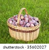 Freshly Picked Plums - stock photo