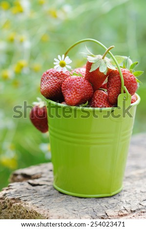 Freshly picked ripe strawberries bucket on a wooden background - stock photo