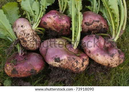 Freshly picked root vegetables - stock photo