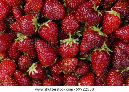 Freshly Picked Strawberries - stock photo