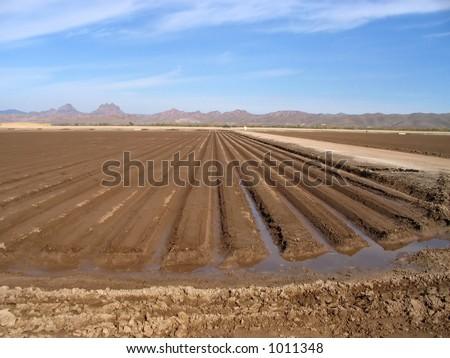 freshly plowed and irrigated farmland - stock photo