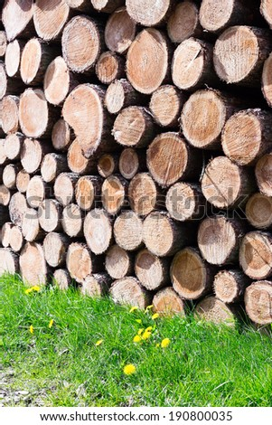 Freshly sawn logs in a forest setting - stock photo