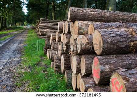 Freshly sawn logs in a forest setting in the Netherlands - stock photo