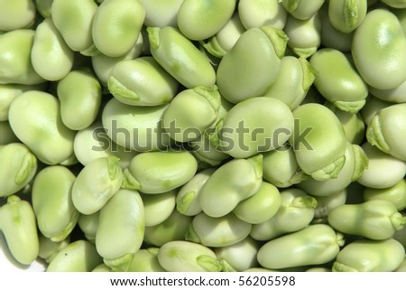 Freshly shelled young succulent broad beans. - stock photo