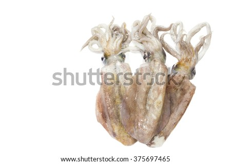 Freshly squid isolated on white background - stock photo