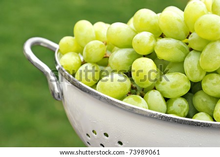 Freshly washed grapes in colander with natural outdoor bokeh as background. with extremely shallow dof. - stock photo