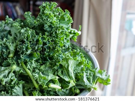 Freshly Washed Kale - stock photo