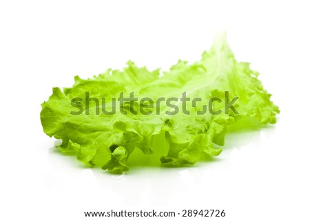 Freshness green leaf lettuce on white background - stock photo