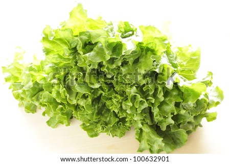 Freshness green lettuce from Japan