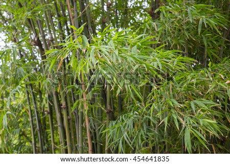 freshness growth green bamboo leaves branch and lush background - stock photo