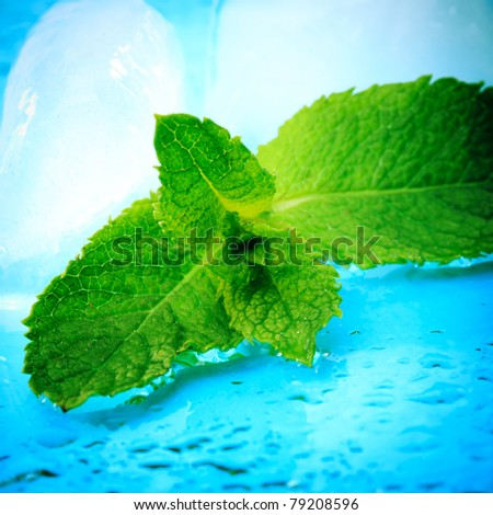 Freshness twig of mint with ice and waterdrops - stock photo